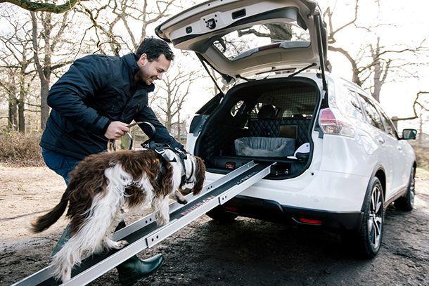 โหมดดูแลสัตว์เลี้ยงในรถยนต์
